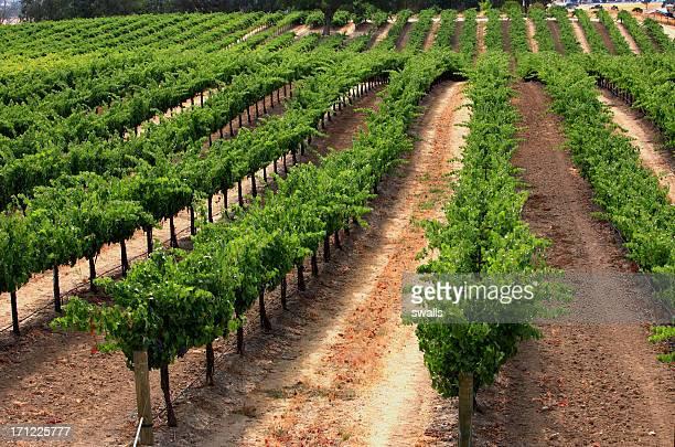 Rolling Vines