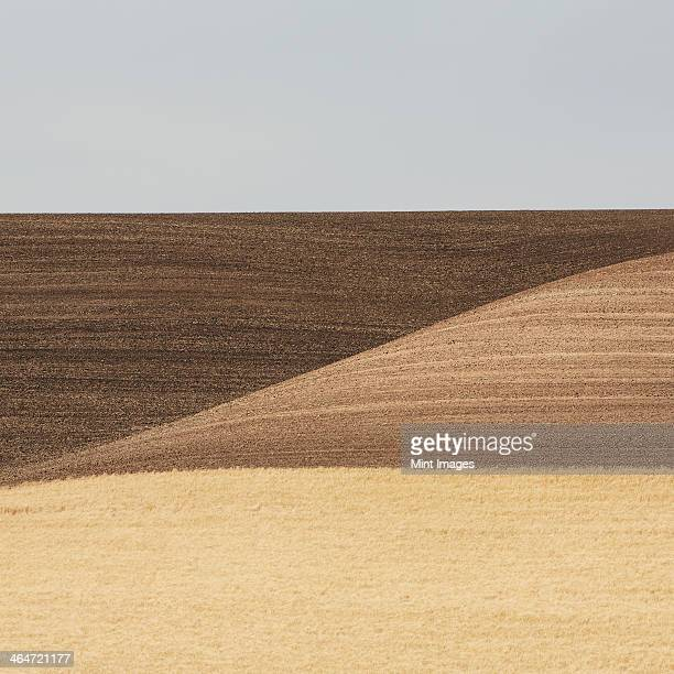 Rolling wheat fields, in the state of Washington