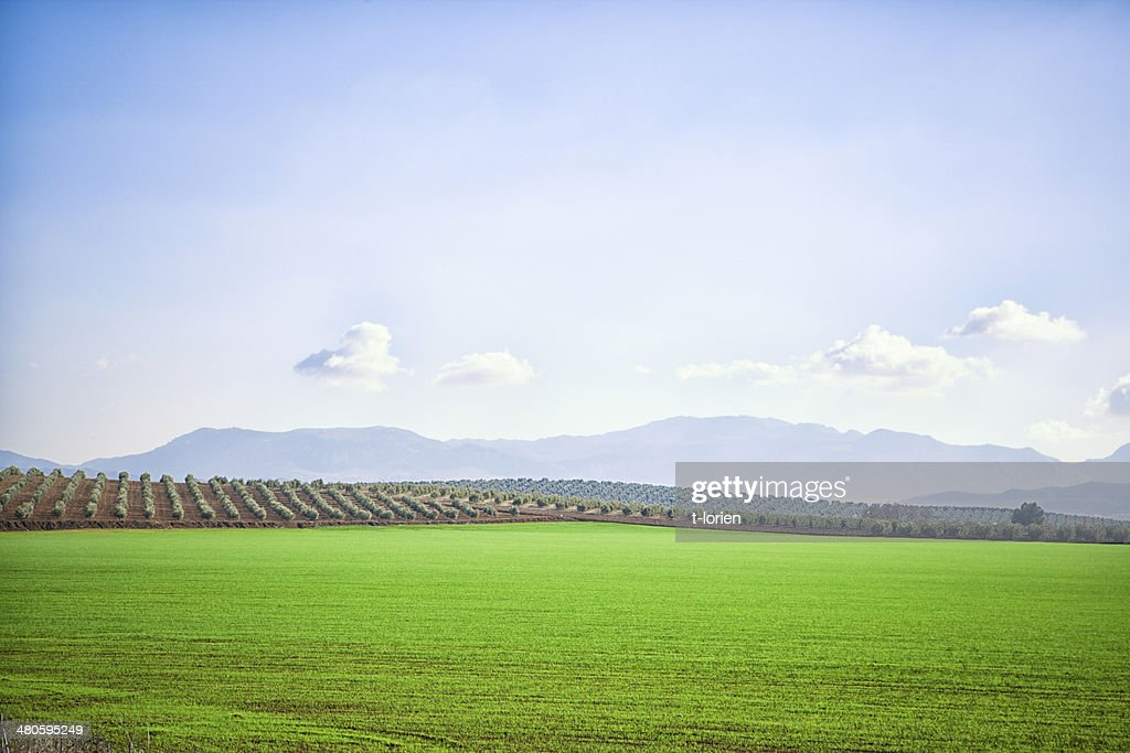 Rollling landscape in Spain. : Stock Photo