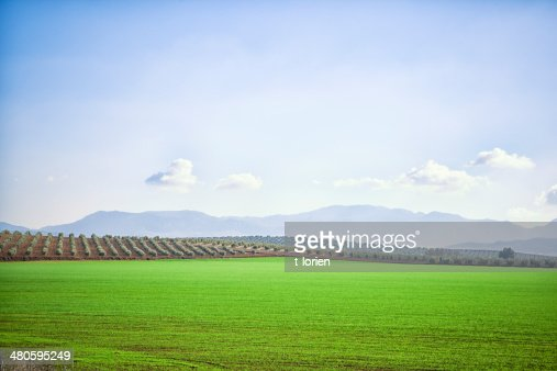 Rollling landscape in Spain. : Stock Photo