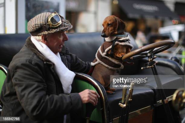 Rollo the dog leans on the steering wheel of a 1904 Renault as vintage cars set to take part in the annual 'London to Brighton Veteran Car Run' go on...