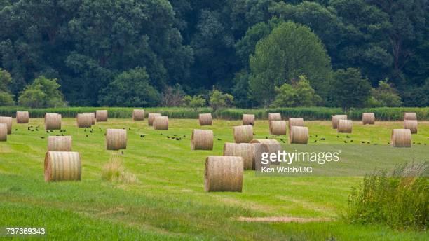 Rolls of hay, Hungary.