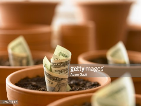 Rolls of twenty dollar bills growing in flowerpots : Stock-Foto