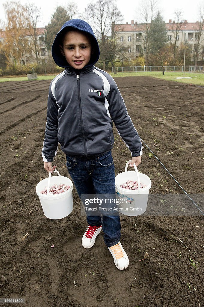 A Roma child plants garlic as part of the 'Bio Knoblauch Romanes' ('Organic Garlic Romanes') project at the August-Heyn gardening school on November 16, 2012 in Berlin, Germany. The project has been launched by cities across Central and Eastern Europe in an effort to create opportunity for European Roma, many of whom are unemployed and live in poverty. Europe imports the vast majority of its organic garlic from China, and initiators hope the project will fill both a need for opportunity and a market niche.