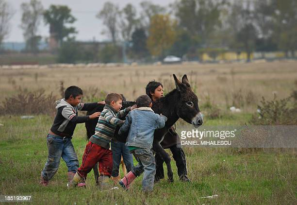 Roma children play with a donkey at the outskirts of Roma neighborhood in Tinca village on October 17 2013 A centre for Roma people built by the...