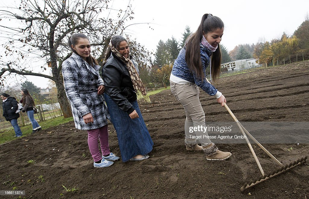 Roma women and children plant garlic as part of the 'Bio Knoblauch Romanes' ('Organic Garlic Romanes') project at the August-Heyn gardening school on November 16, 2012 in Berlin, Germany. The project has been launched by cities across Central and Eastern Europe in an effort to create opportunity for European Roma, many of whom are unemployed and live in poverty. Europe imports the vast majority of its organic garlic from China, and initiators hope the project will fill both a need for opportunity and a market niche.