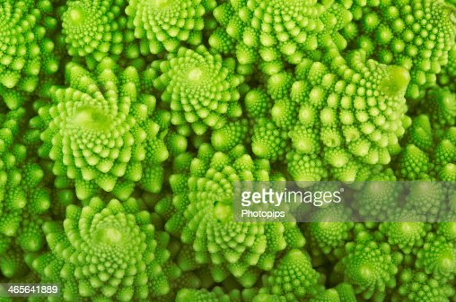 Roman broccoli : Stock Photo