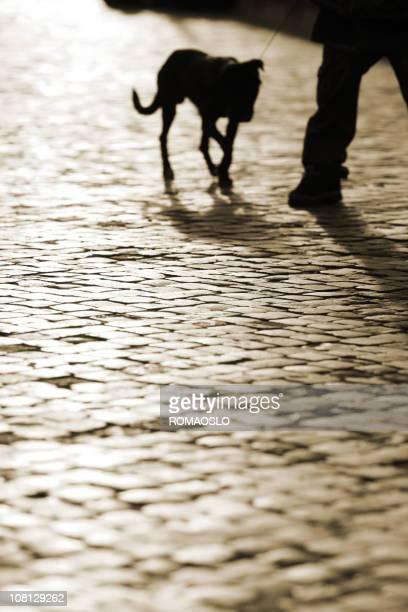 Roman cobblestone dog silhouette, Rome Italy