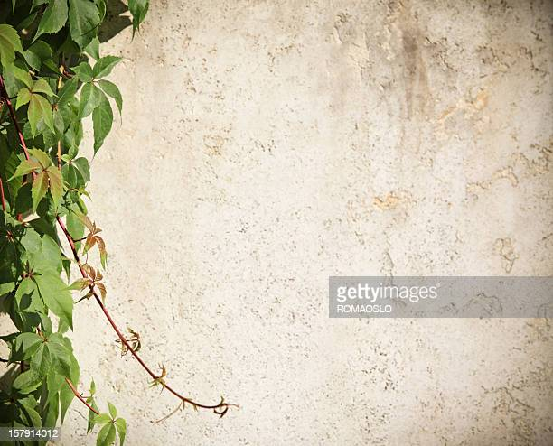 Roman wall background with vine, Rome Italy
