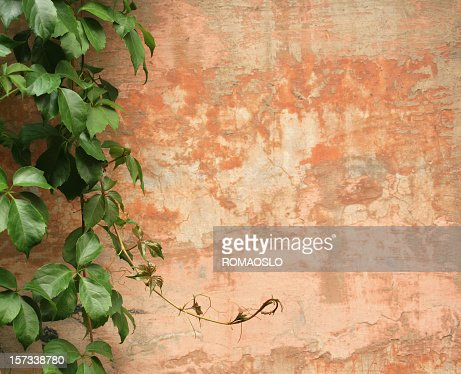 Roman wall background with vines