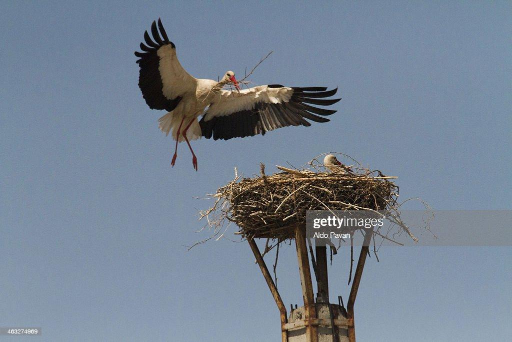 Romania, Danube Delta, Letea, stork
