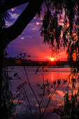 Silhouette of vegetations and foliage with head plant in foreground. Majestic colorful sky with ray of sun in reflection in the water