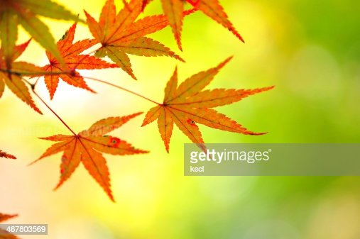Romantic autumn colors...