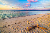 Pastel colored sky, clouds and seascape at dusk. Wide angle view from sandy beach with trunk fragment in the foreground. Tanjung Karang, Sulawesi, Indonesia.