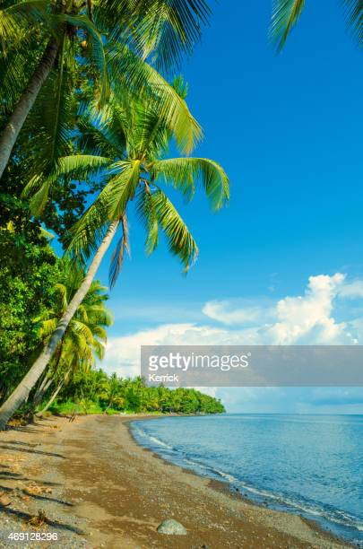 romantic tropical beach with palms and pebbles beach in Asia
