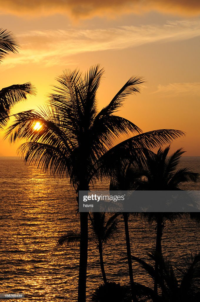 romantically sunset at atlantic coast in tenerife with palm tree