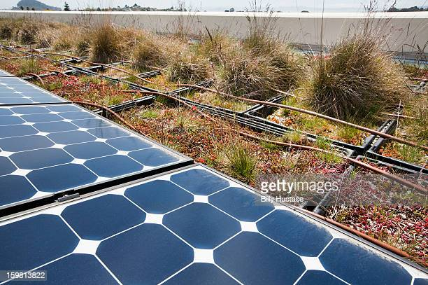 Rooftop drip irrigation garden and solar panels