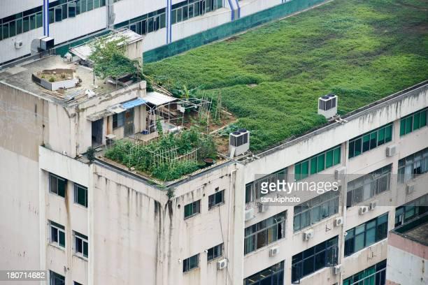 Gemüse Garten auf dem Dach