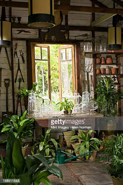 A room in a house with plants on every surface.Glossy green leaves.