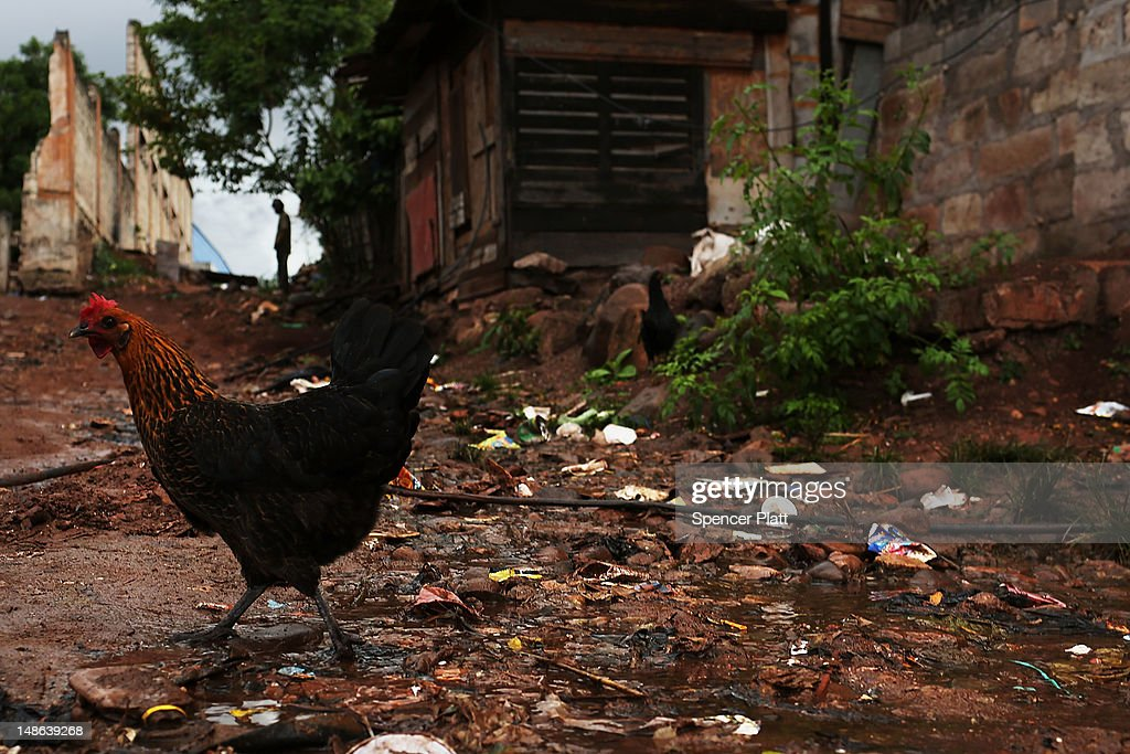 A rooster is viewed in a gang infested neighborhood on July 18 2012 in Tegucigalpa Honduras Honduras now has the highest per capita murder rate in...