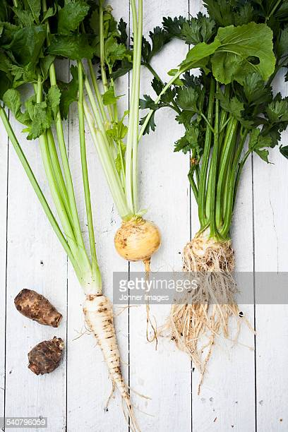 Root vegetables on wooden background