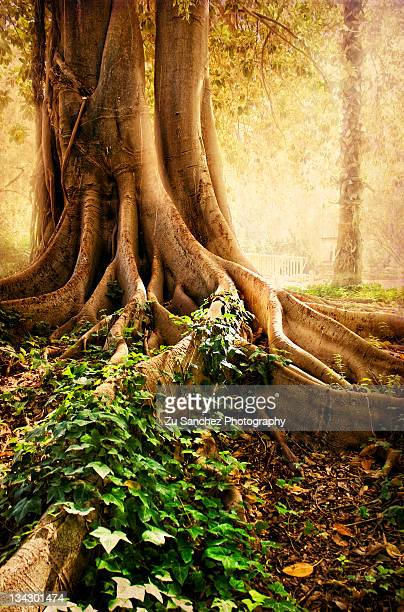 Roots and ivy