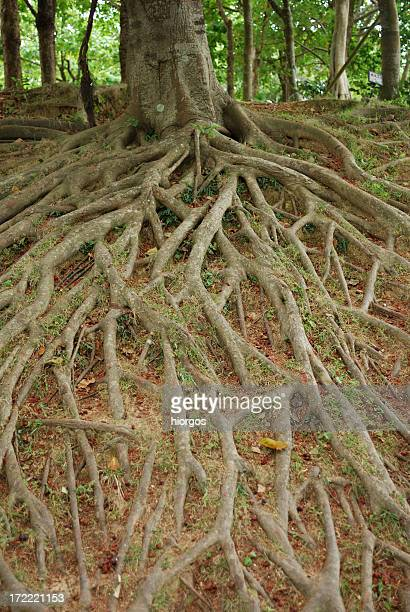 roots and tree