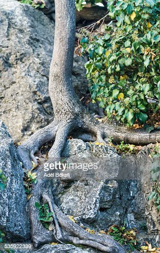 Roots : Stock Photo