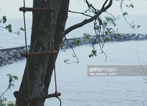 Rope Ladder Against Tree Trunk And Lake