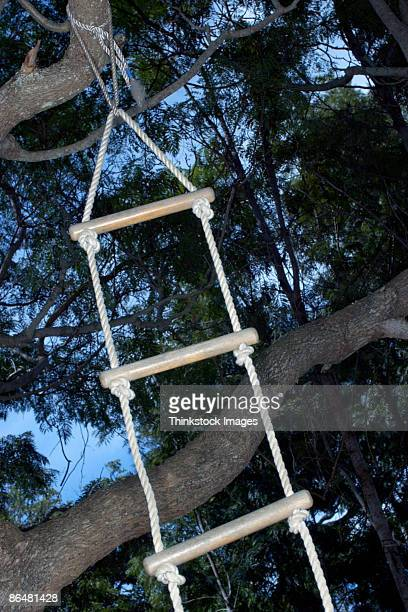 Rope ladder hanging from tree