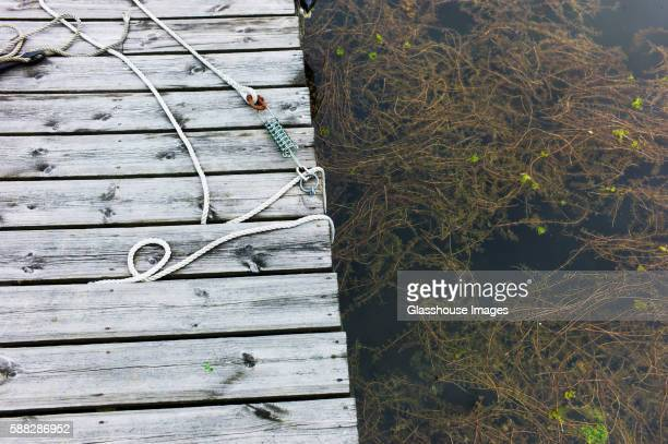 Rope Laying on Wooden Dock Next To Water Plants