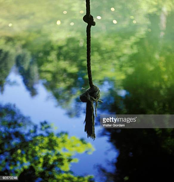 Rope swing over a pond