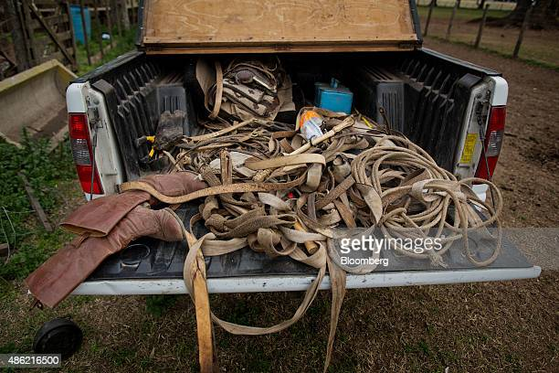 Ropes saddles leads boots and other equipment used by gauchos sits in the bed of a pickup on the Estancia La Argentina farm outside of San Antonio de...