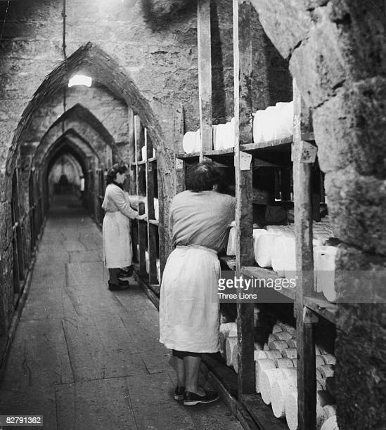 Roquefort cheese made from ewe's milk ripens in the underground vaults beneath RoquefortsurSoulzon in southern France circa 1950