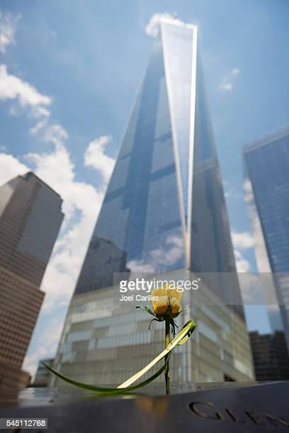 Rose at National September 11 Memorial in New York City