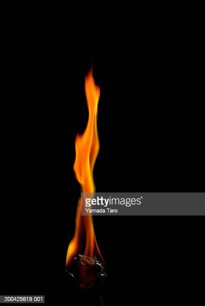 Rose (Rosa sp.) burning