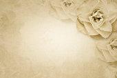 Rose flower on paper background
