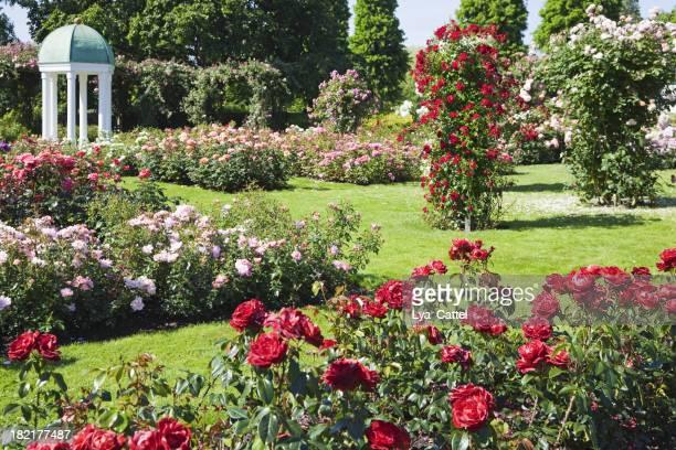 Rose garden # 6 XXXL