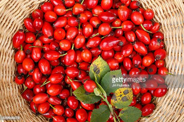 Rose hips of the Dog Rose -Rosa canina- in a wicker basket, Bavaria, Germany