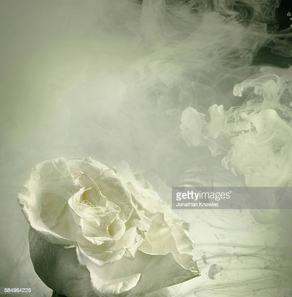 Rose in a tank of water and dissolving paint