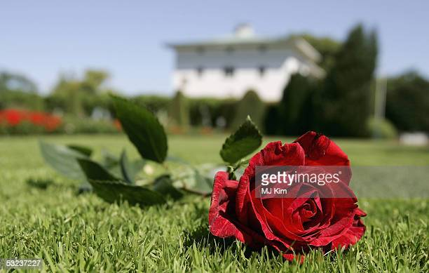 A rose is seen in front of Solliden Palace the Royal summer residence where Crown Princess Victoria of Sweden attends celebrations for her 27th...