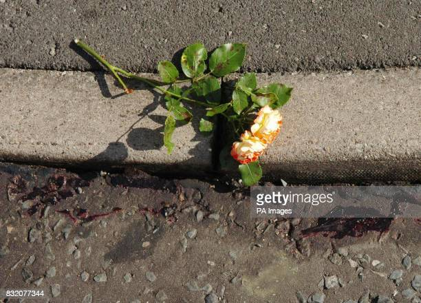 A rose lies next to blood on the road at the junction of Dalton Close and Billinge Street in Blackburn Lancashire where a sixyearold girl was killed...