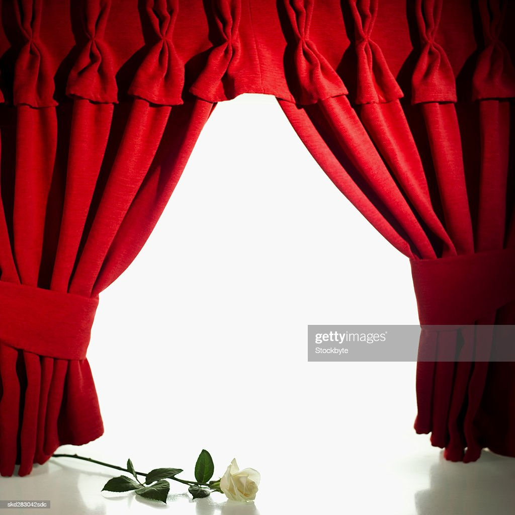 Rose lying on a stage : Stock Photo
