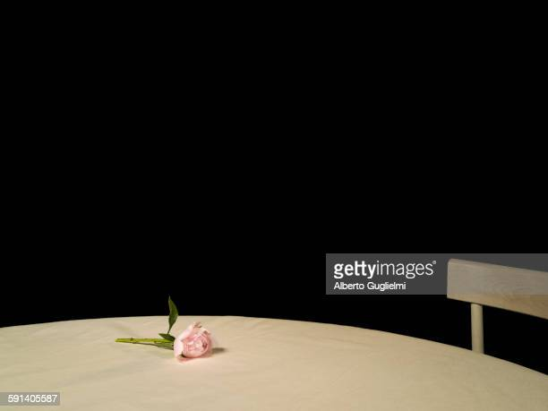 Rose on empty table