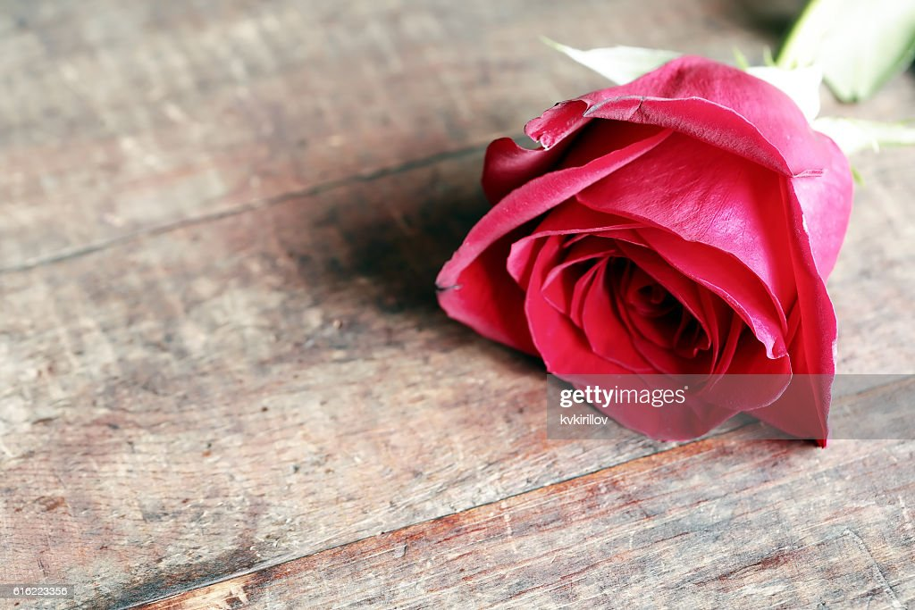 Rose On Wood : Stock Photo