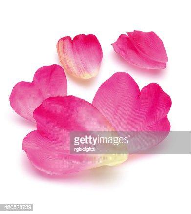 Rose Rosenblätter : Stock-Foto