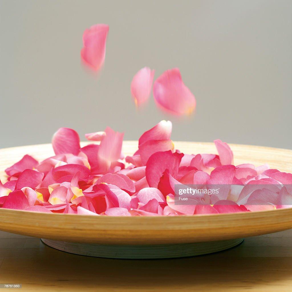 Rose Petals : Stock Photo