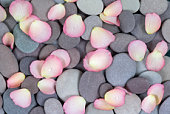 Rose petals with water droplets scattered on granite pebbles, close-up