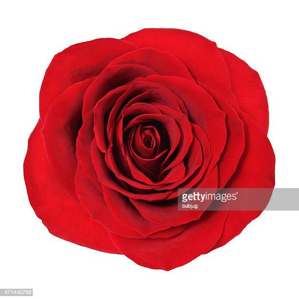 Rose with clipping path