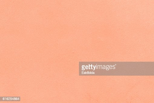 Rose pink color : Stock Photo